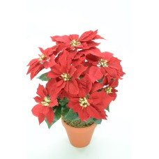 Red Velvet Poinsettia Bush x7  (Lot of 1) SALE ITEM