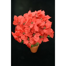 Red Satin Poinsettia Bush x24  (Lot of 1) SALE ITEM