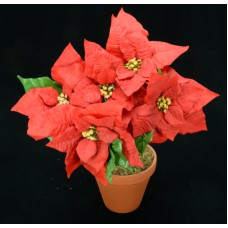 Red Micro Peach Poinsettia Bush x5 (Lot of 1) SALE ITEM