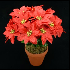 Red Poinsettia Bush x12 (Lot of 1) SALE ITEM