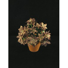 Poinsettia Bouquet, bronze (lot of 12)