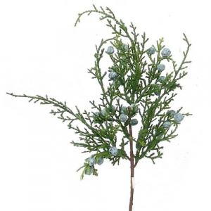 Juniper Pick x 4 (lot of 1 Bundle - 12 Pcs Per Bundle) SALE ITEM