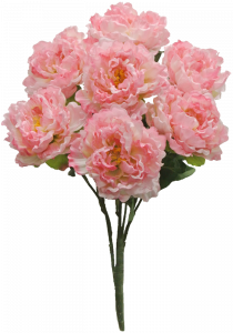 Pink Peony Bush x7  (Lot of 1) SALE ITEM