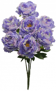 Purple Peony Bush x7  (Lot of 1) SALE ITEM