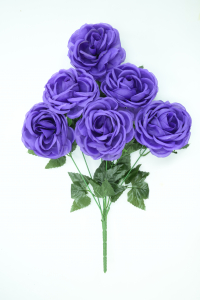 Purple Economy Cabbage Rose Bush x 6  (Lot of 1) SALE ITEM
