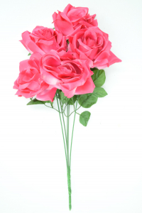 Beauty Satin May Rose Bush x5  (Lot of 1) SALE ITEM