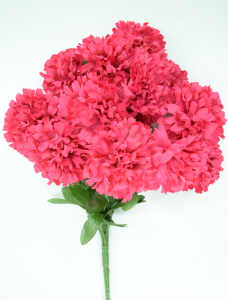 Beauty Carnation Bush x12  (Lot of 1) SALE ITEM