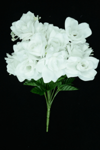 White Micro White Open Rose Bush x12 (Lot of 1) SALE ITEM