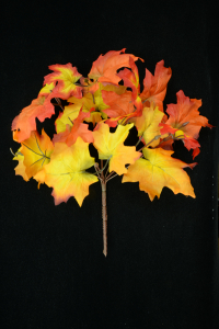 Orange Maple Leaf Bush x7 (Lot of 1) SALE ITEM