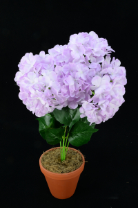 Lavender Hydrangea Bush x7  (Lot of 12) SALE ITEM