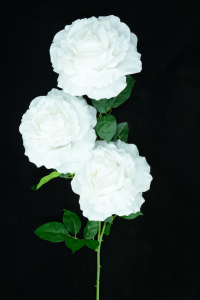 White Open Rose Bush x3  (Lot of 12) SALE ITEM