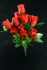 Red Rosebud Bush x12  (Lot of 12) SALE ITEM
