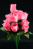 Pink Rosebud Bush x12  (Lot of 12) SALE ITEM