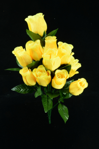 Yellow Rosebud Bush x12  (Lot of 12) SALE ITEM