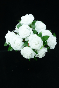 White Open Rose Bush x11  (Lot of 12) SALE ITEM