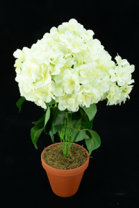Ivory Hydrangea Bush x7  (Lot of 1) SALE ITEM