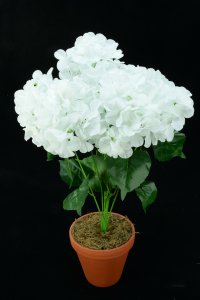 White Hydrangea Bush x7  (Lot of 1) SALE ITEM