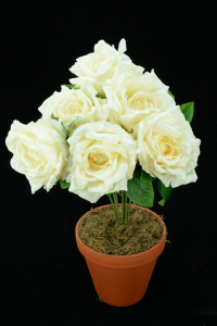 Ivory Open Rose Bush x6  (Lot of 1) SALE ITEM