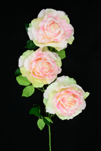 Pink Open Rose Bush x3  (Lot of 1) SALE ITEM