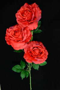 Red Open Rose Bush x3  (Lot of 1) SALE ITEM