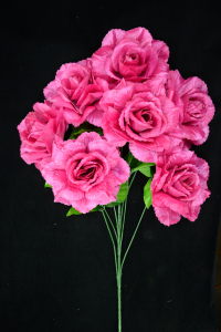 Magenta Open Rose Bush x7  (Lot of 1) SALE ITEM