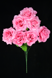 Pink Open Rose Bush x7  (Lot of 1) SALE ITEM