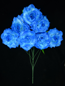 Royal Blue Open Rose Bush x7  (Lot of 1) SALE ITEM