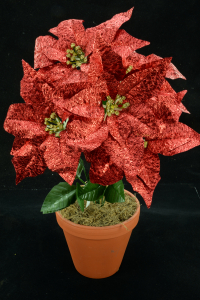 Red Metallic Poinsettia Bush x 5 (lot of 1 bush) SALE ITEM