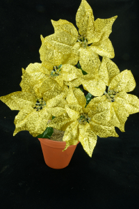 Gold Metallic Poinsettia Bush x 5 (lot of 1 bush) SALE ITEM