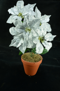 Silver Metallic Poinsettia Bush x 5 (lot of 144 bushes) SALE ITEM