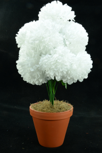 White Carnation-Mum Bush x12  (Lot of 1) SALE ITEM