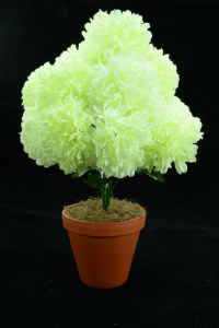 Ivory with a Slight Green Tint Carnation-Mum Bush x12  (Lot of 1) SALE ITEM