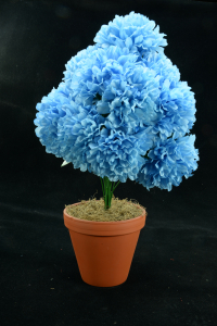 Blue Carnation-Mum Bush x12  (Lot of 1) SALE ITEM