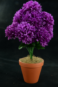 Purple Carnation-Mum Bush x12  (Lot of 1) SALE ITEM