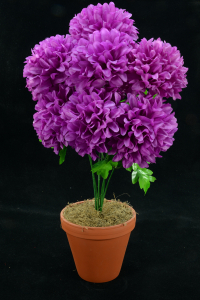 Purple Carnation-Mum Bush x7  (Lot of 1) SALE ITEM