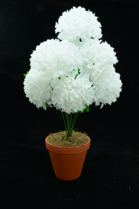 White Carnation-Mum Bush x7  (Lot of 1) SALE ITEM