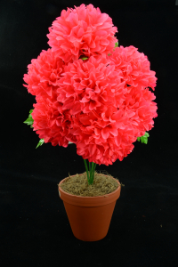 Hot Pink Carnation-Mum Bush x7  (Lot of 1) SALE ITEM