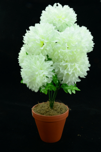 Ivory Carnation-Mum Bush x7  (Lot of 1) SALE ITEM