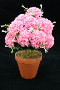Pink Carnation-Mum Bush x12  (Lot of 1) SALE ITEM