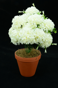 Ivory Carnation-Mum Bush x12  (Lot of 12) SALE ITEM