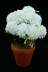 White Carnation-Mum Bush x12  (Lot of 12) SALE ITEM