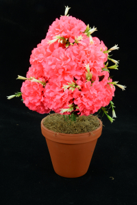 Hot Pink Carnation-Mum Bush x12  (Lot of 12) SALE ITEM