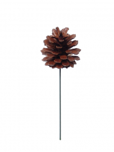 "2.5"" Natural Lacquered Pine Cone Pick (Lot of 1 Bag - 12 Picks Per Bag) SALE ITEM"